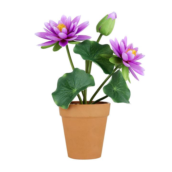 Hopscotch Buy Set Of 2 Lotus Flower Pot Purple White Online